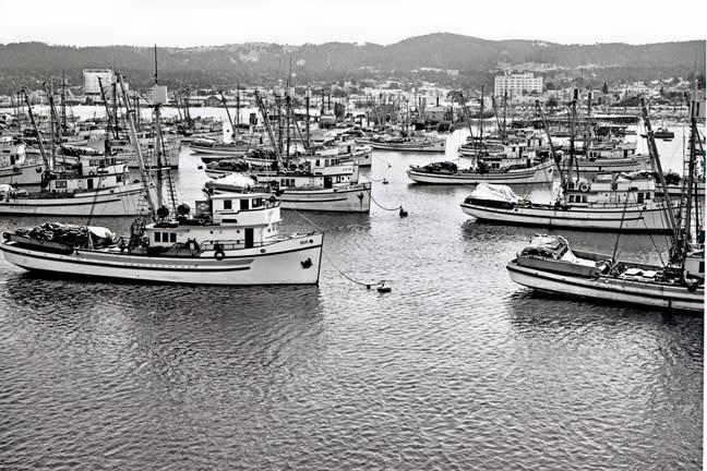 Sardine fleet at anchor (Hathaway)