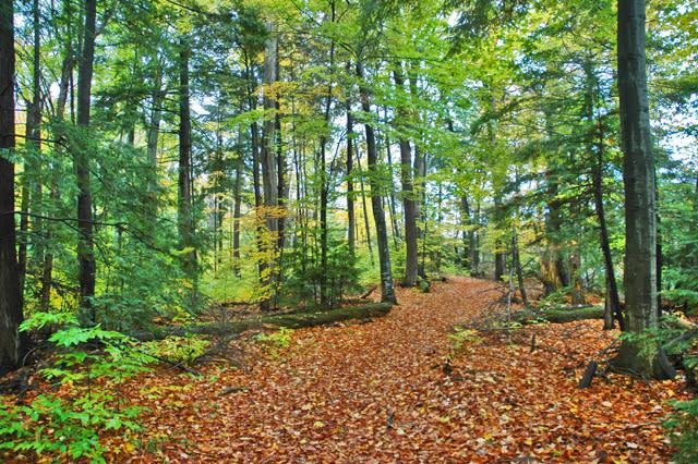 A quiet trail along the Long Lake shore.
