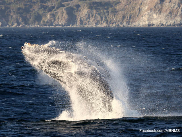 Whale Watching on Monterey Bay