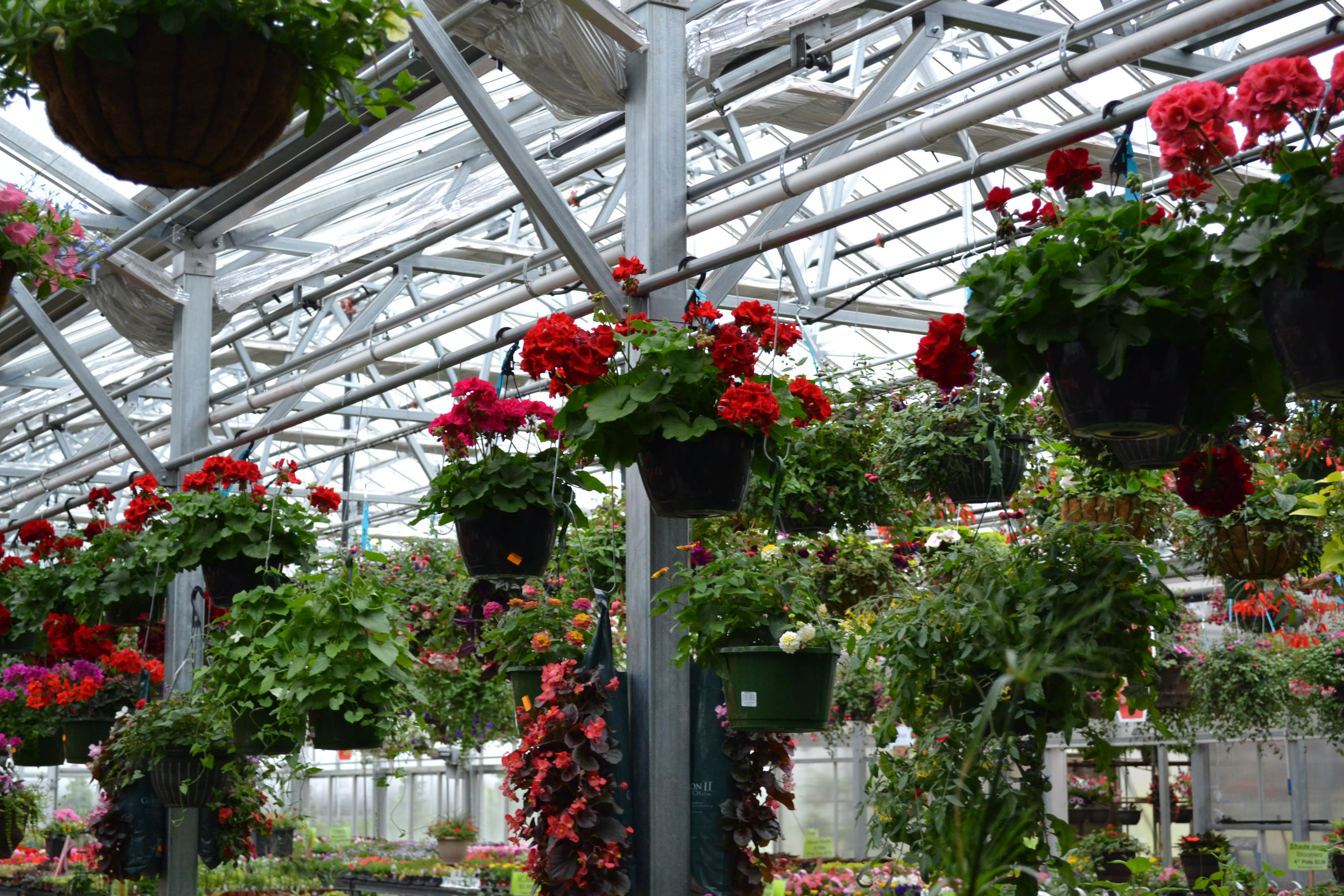 May's Floral Green House- photo by: Katie Lindquist