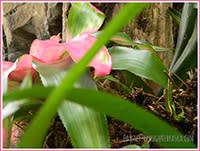 Zoo - flower