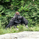 Family Ramblings - Zoo