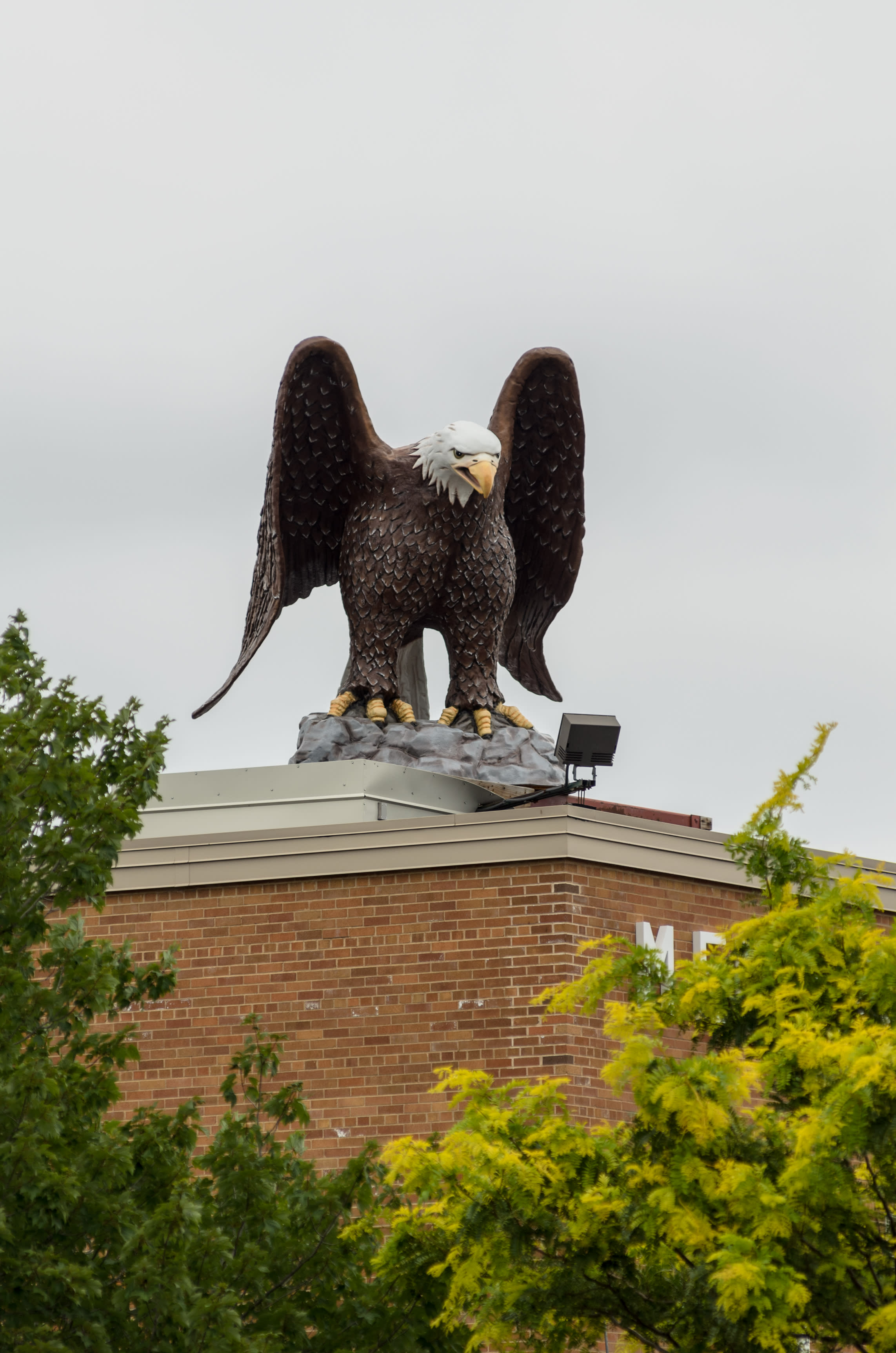 Old Abe stands guard atop Eau Claire Memorial High School, where she is the school mascot. Photo by Lee Butterworth/Volume One