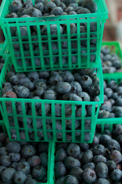 Blueberry Buttermilk Tart Recipe | ExploreAsheville.com
