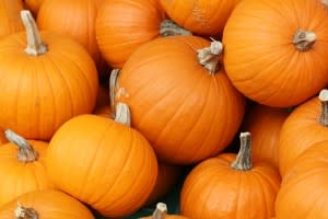 Pumpkins in Greater Lansing Michigan Fall Fun