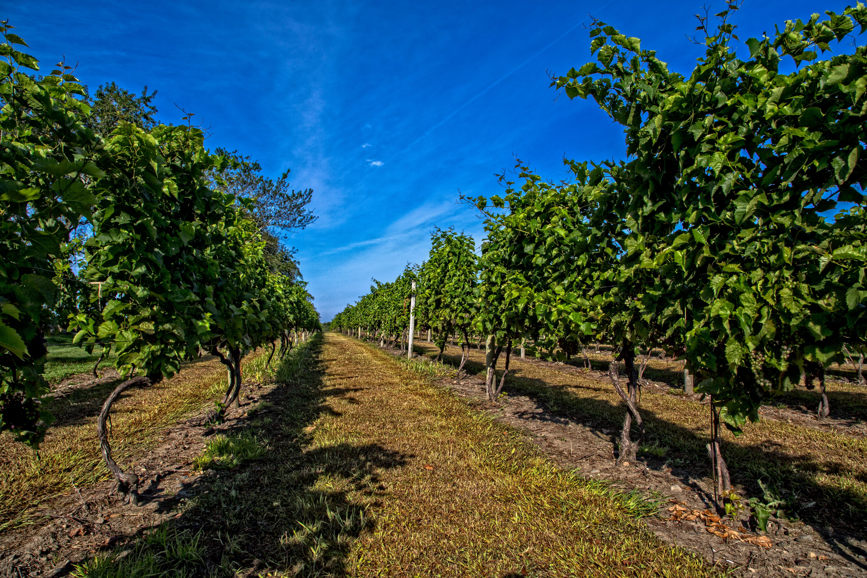 carolyn's sakonnet vineyard vines_credit Seven Swords Media