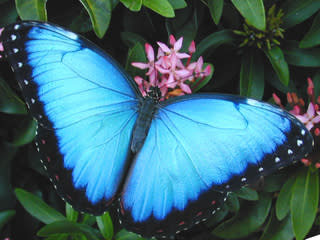 Butterfly on Botanical Plant
