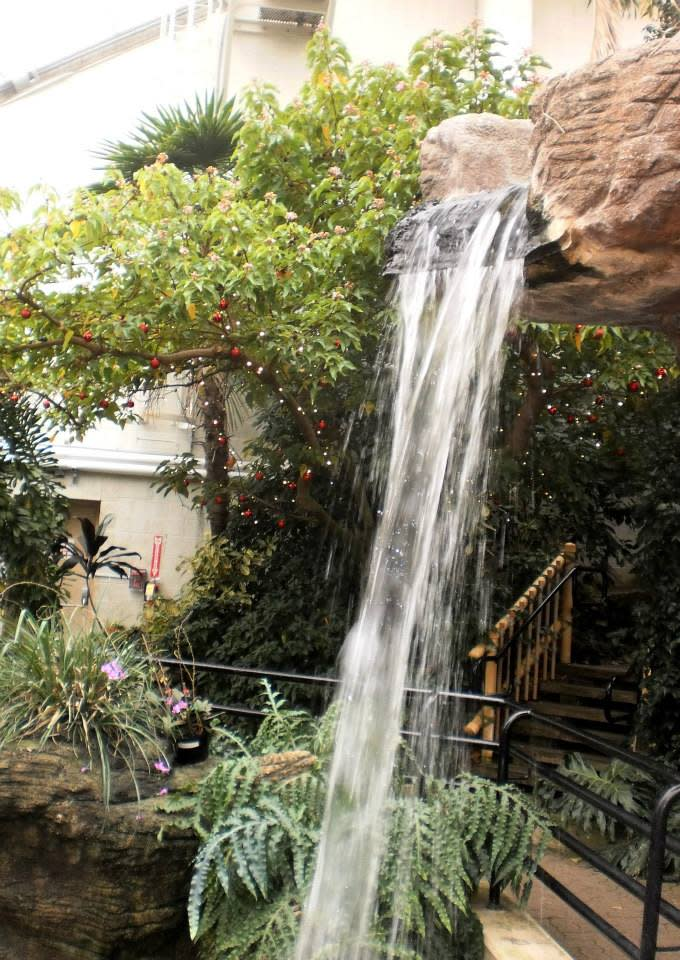 The waterfall at the Conservatory is always a highlight for me!