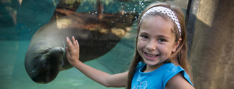 Fort Wayne Children's Zoo Sea Lion