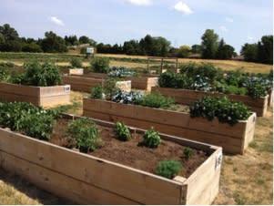 garden blog_1