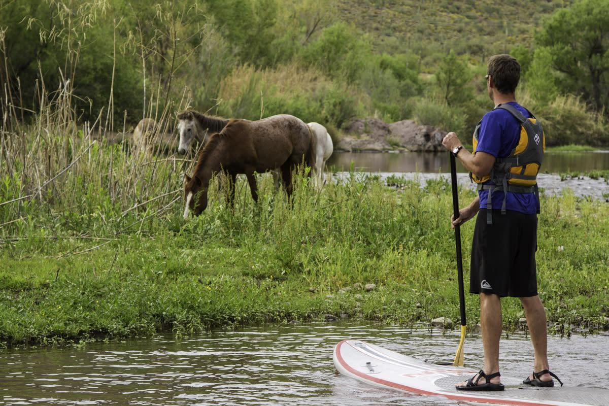paddleboarding salt river horses