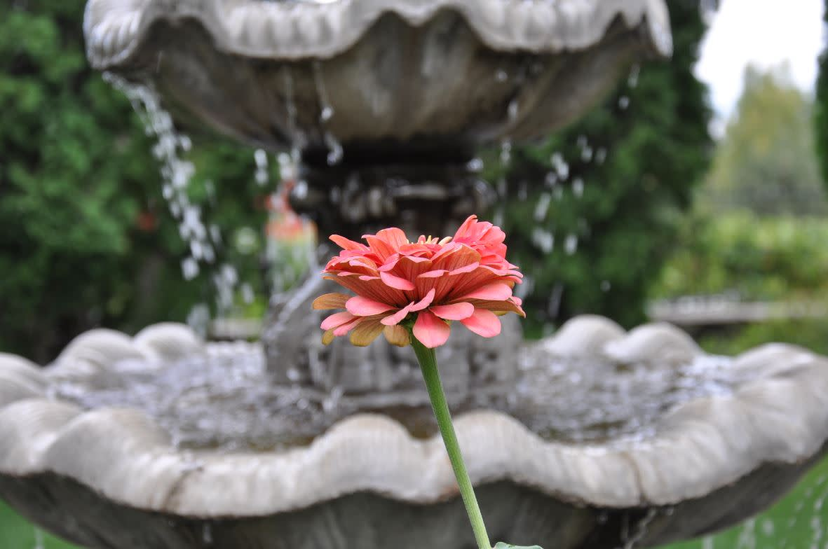 Flower in front of the fountain