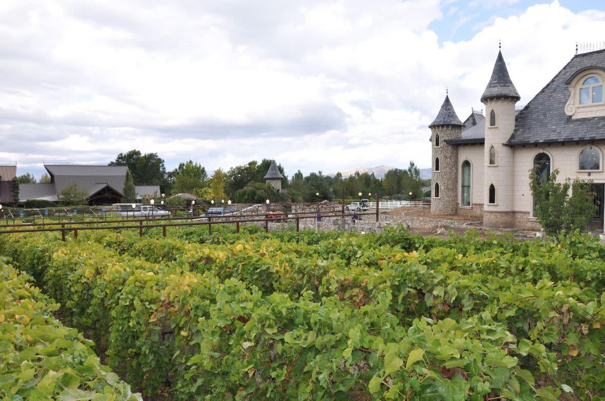 Wadley Farms Vineyard