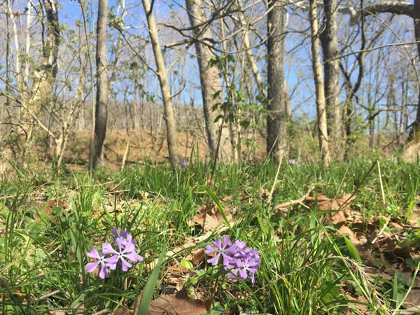 Flowers and woods at Cedar Bluffs Nature Preserve