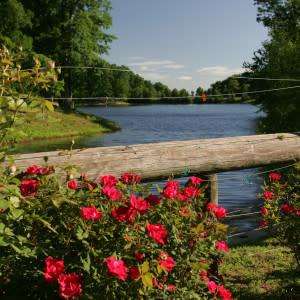 Tarara shadow lake roses
