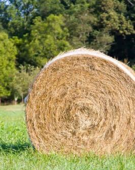 Big Hay