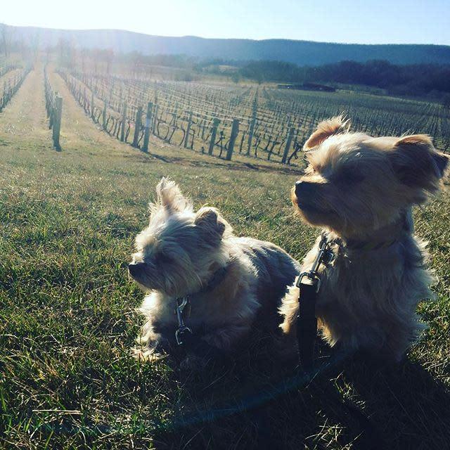 Dog Days at Breaux Vineyards