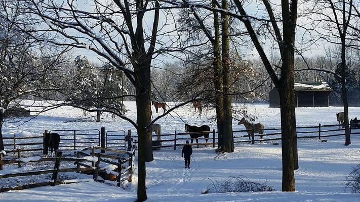 Snowy ground only enhances the trail rides offered by Red Buffalo Ranch.