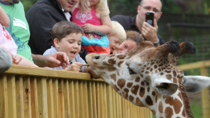 This weekend is the last for giraffe feeding at the Elmwood Park Zoo.