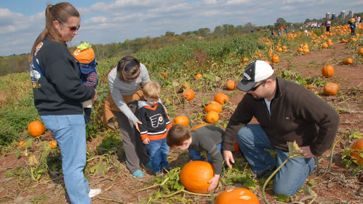 Pumpkins, piglet races, giant slides and pony rides at Freddy Hill Farms
