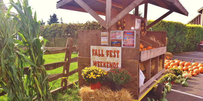 Get your autumn on this weekend at Northern Star Farm