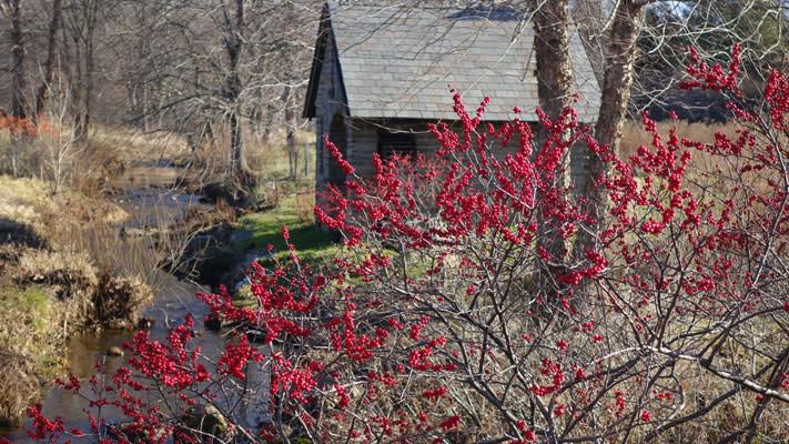 The Morris Arboretum's Winter Wellness Walks return starting Saturday morning.