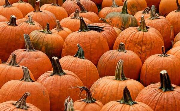 did someone say pumpkin?
