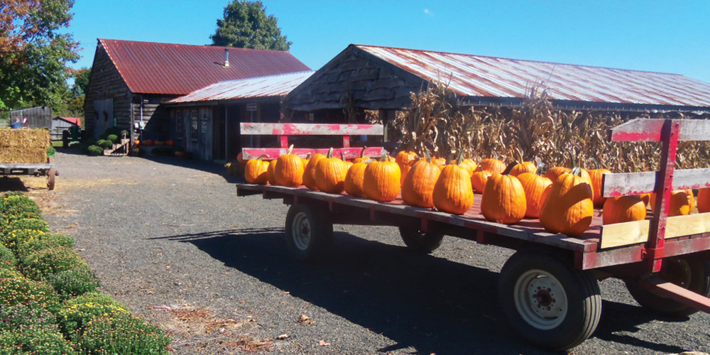 pick your perfect pumpkin at varner farms