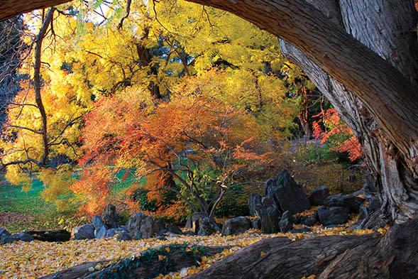 A fall day at Morris Arboretum