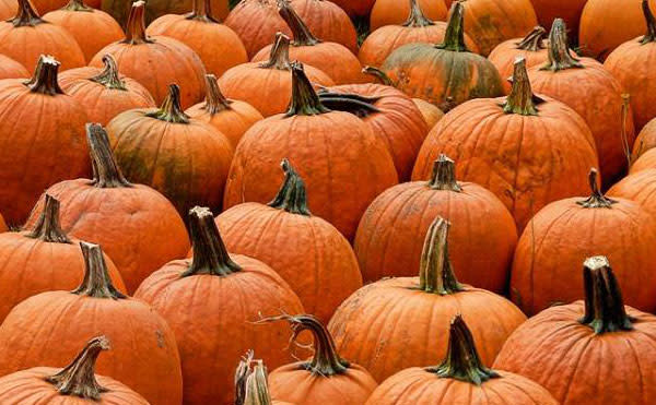 if you haven't had enough pumpkin fun yet, Norristown has you covered