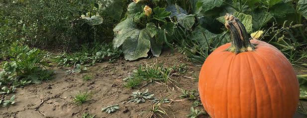 Fall Farm Markets