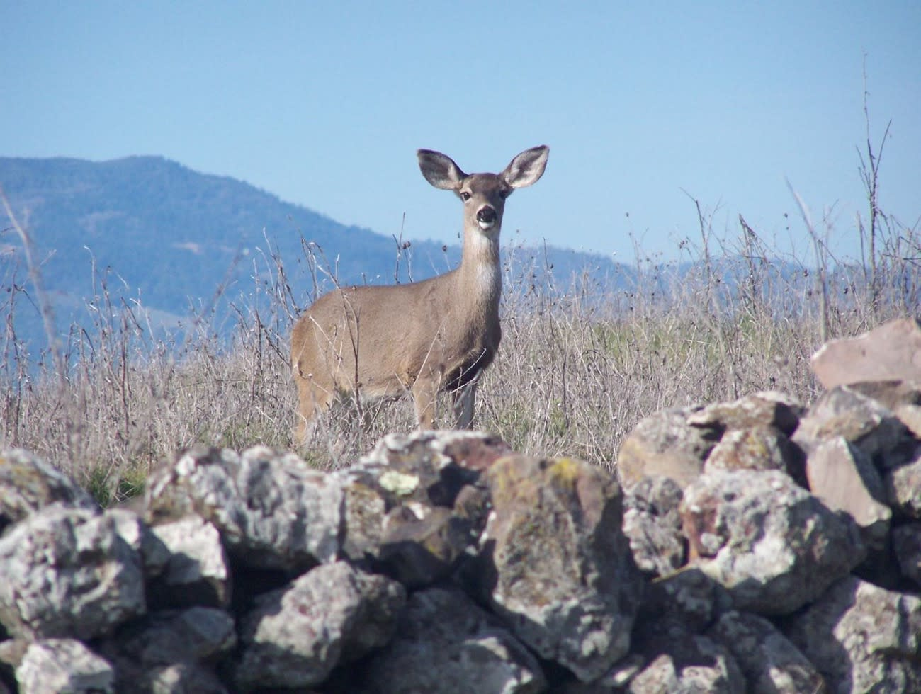 Skyline Wilderness Park in Napa Valley