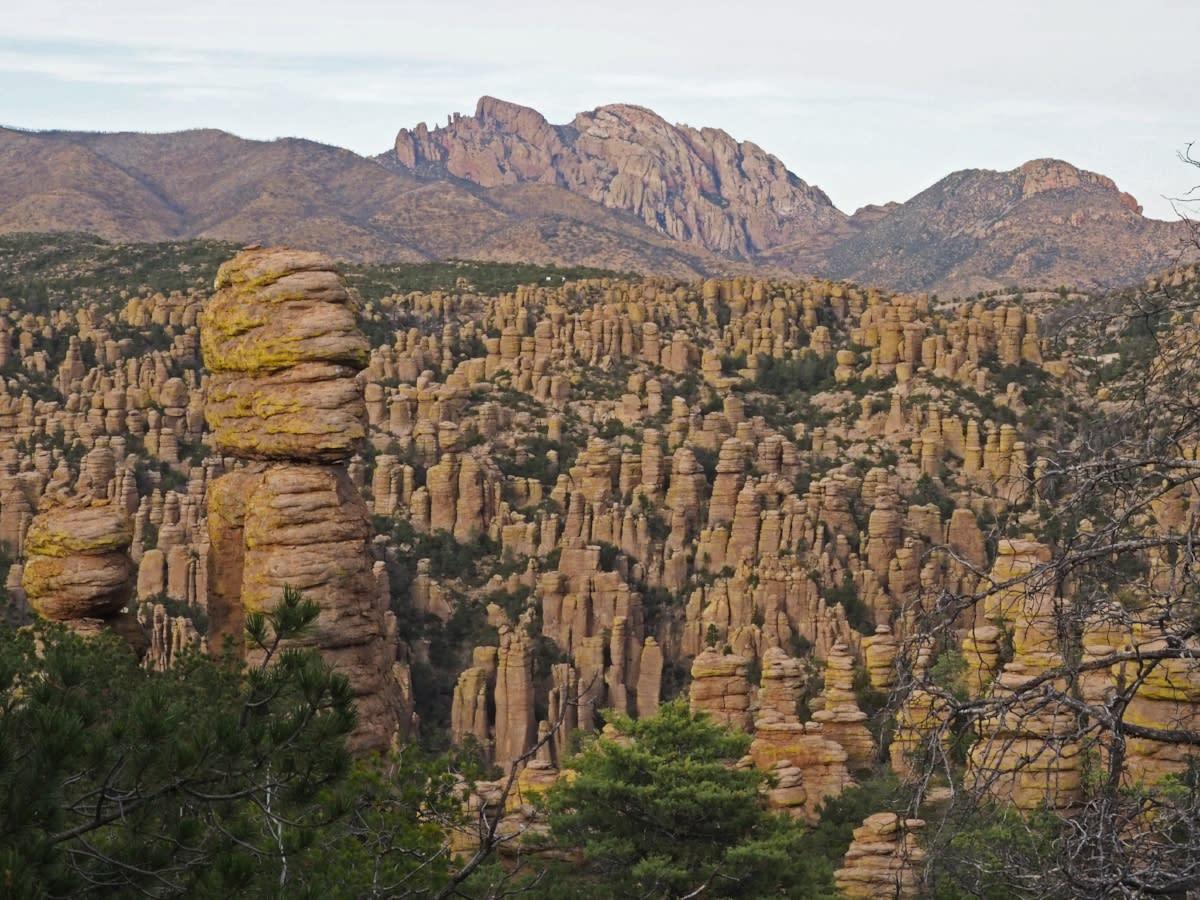 Chiracahua Mountains