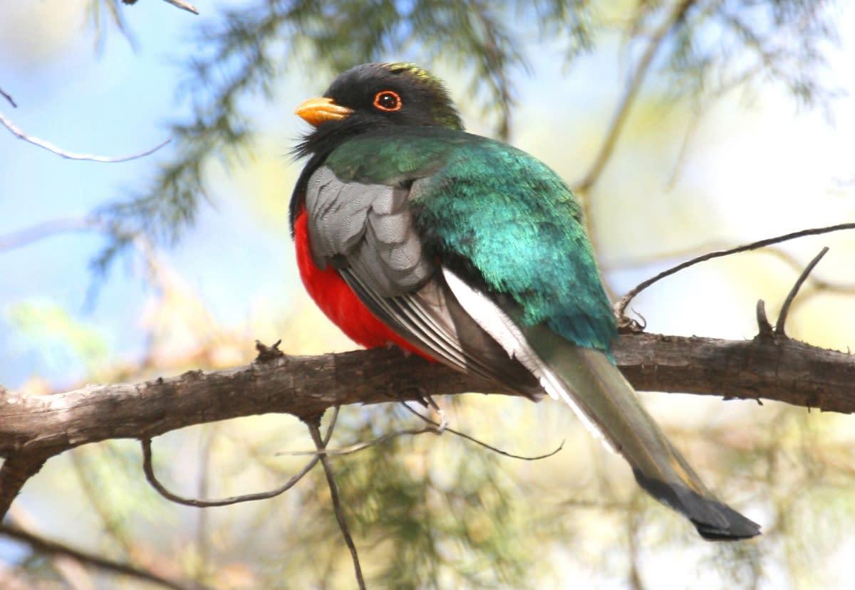 Birding in Sierra Vista
