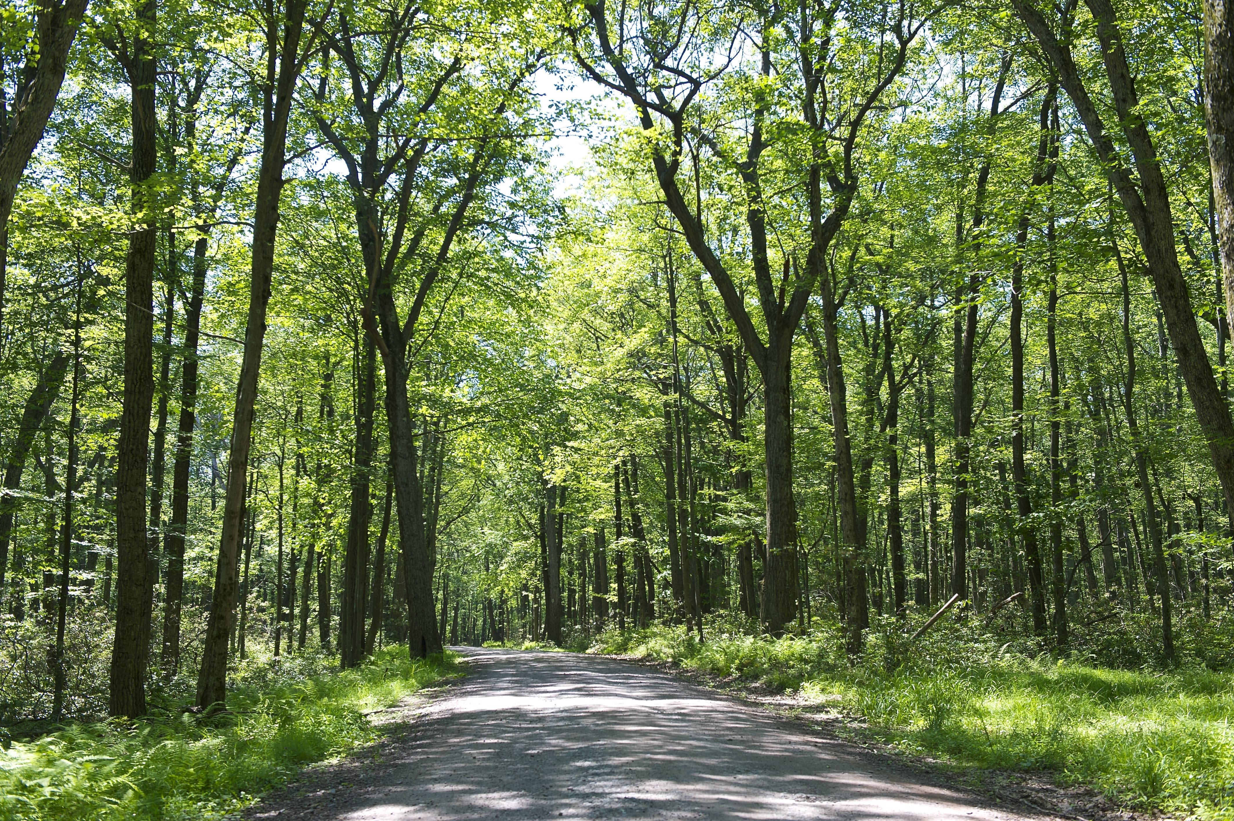 Scenic Roadway in the Pocono Mountains