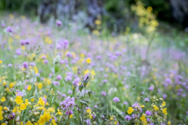 Wildflowers at Iron Mountain by Naturally Inspired