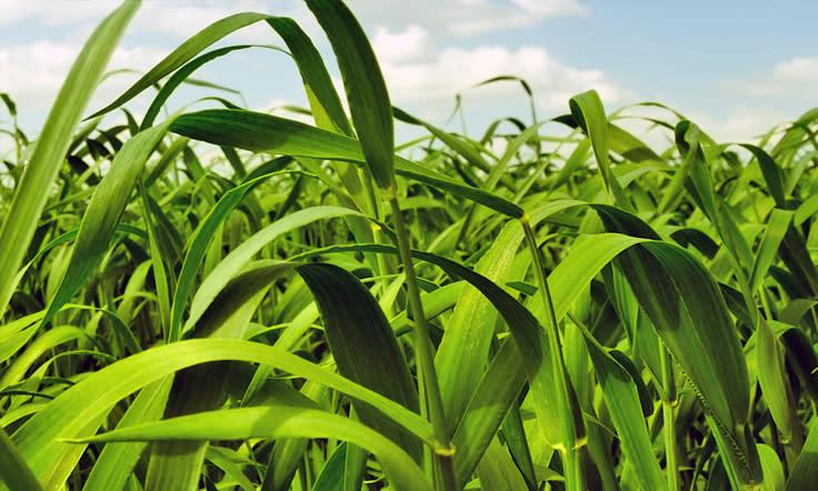 Texas Plant Protection