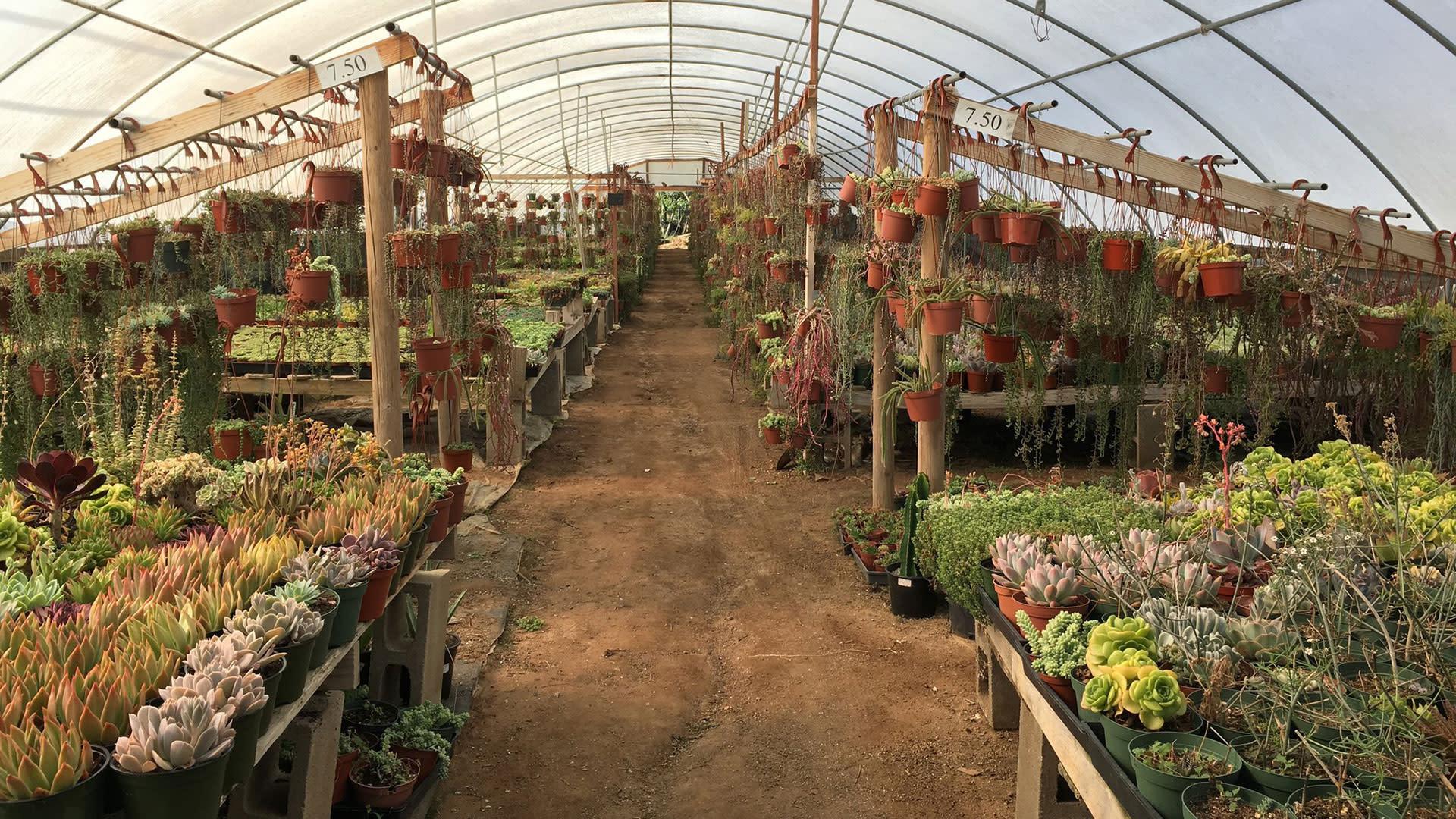Mariscal Cactus & Succulents