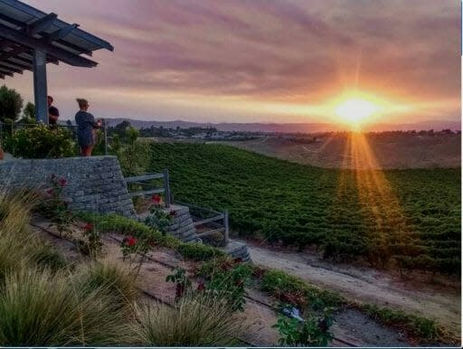 sunset from terrace at Callaway Vineyard overlooking the vineyards