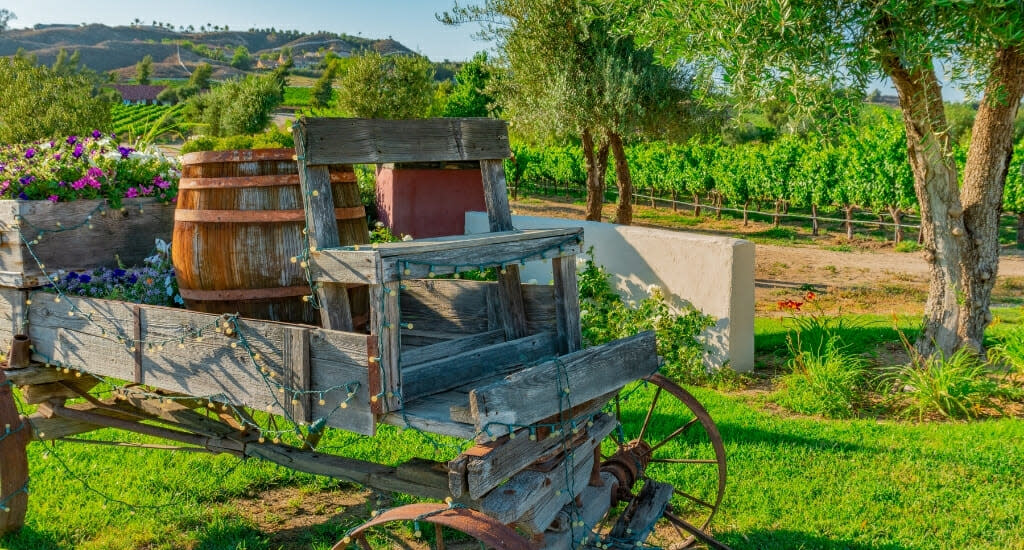Old, rusty horse carriage with wine barrels in front of vineyards