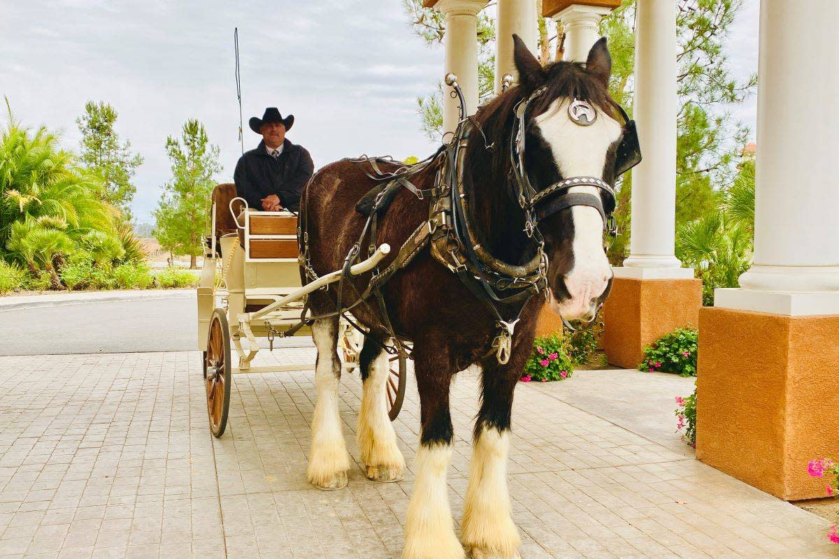 Chewy the Clydesdale pulls the carriage with owner Mike Matson of Temecula Carriage Co. at the helm. (Julie L. Kessler/Special to S.F. Examiner)