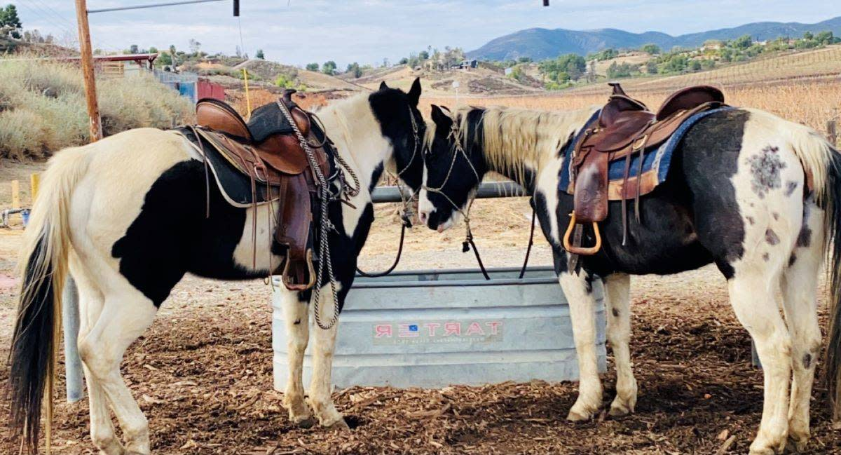 Patch and Decca of Wine Country Trails nestle before their afternoon ride. (Julie L. Kessler/Special to S.F. Examiner)