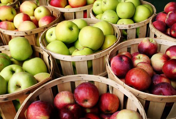 Utah Valley Fall Bucket List Activities - Fresh Fruit