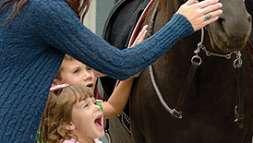Horse Atrractions