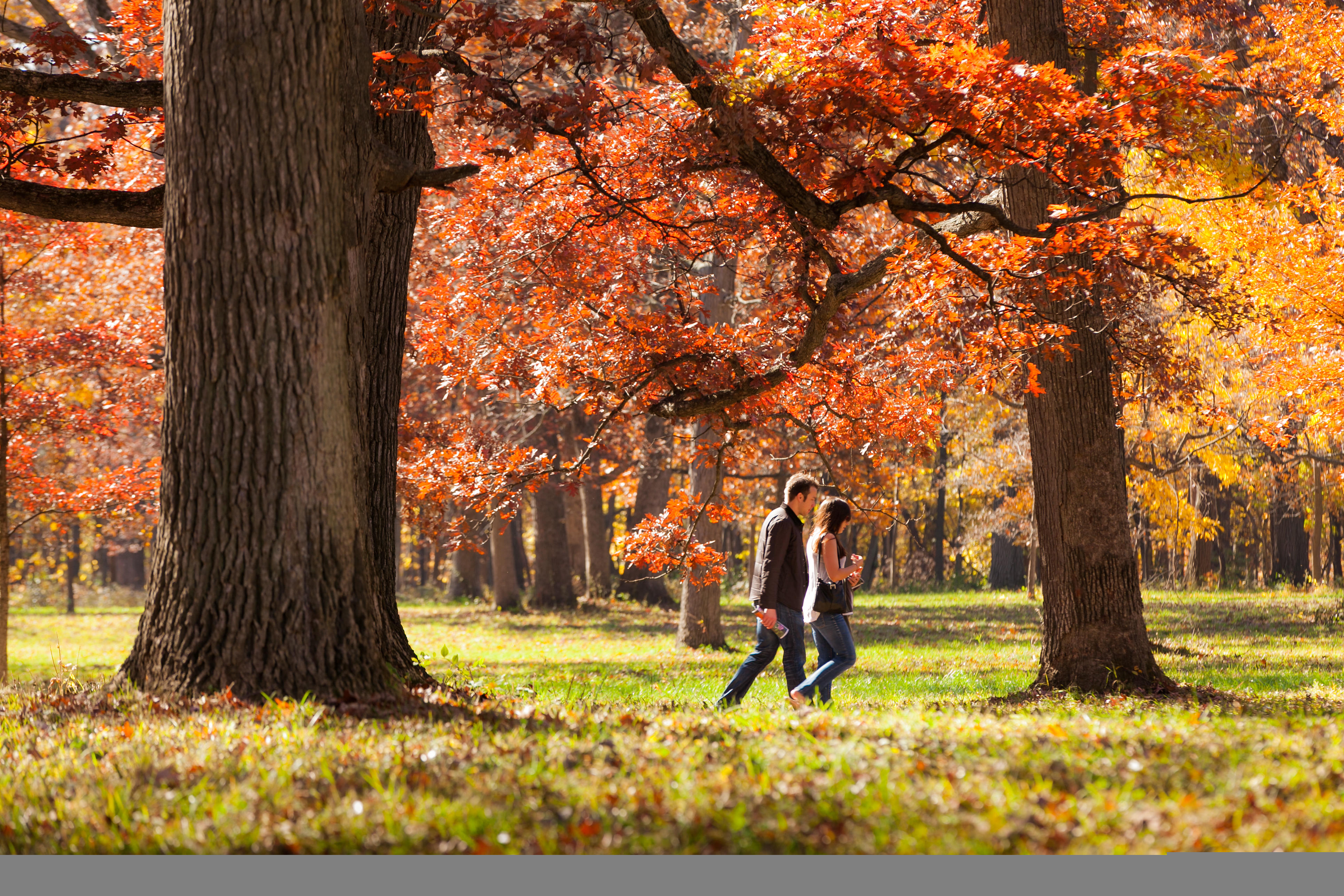 Couple walking among colorful trees at Arboretum