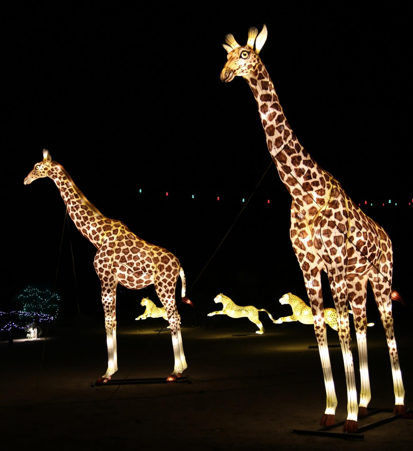 Light up giraffes at The Living Desert