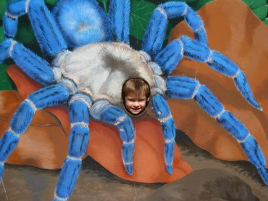 This Tarantula Mural is perfect for a photo op!