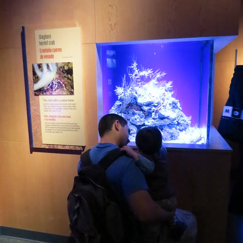 ¡Viva Baja! Life on the Edge at the Monterey Bay Aquarium
