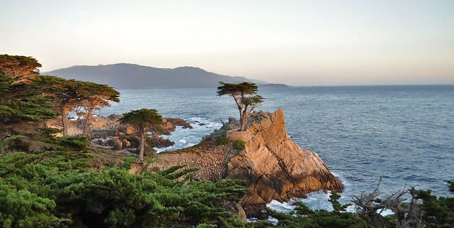 Lone Cypress Tree, 17-Mile Drive, California