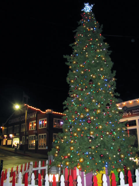 Holiday Tree & Lights on Cannery Row